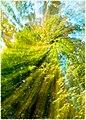 Through the leaves (France through my eyes) (29762987245).jpg
