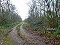 Track into Hempstead Wood (geograph 4308096).jpg