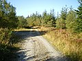 Track junction in the Dyfnant Forest - geograph.org.uk - 1508325.jpg