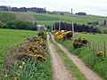 Track to Stevensburn - geograph.org.uk - 434159.jpg