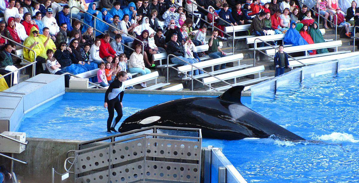 whale kills trainer at seaworld in orlando  florida