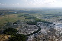 Aerial view of Everglades with sawgrass and coastal marsh