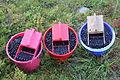 Tre bøtter blåbær II.JPG