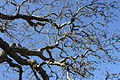 Tree, Downpatrick, March 2010 (03).JPG