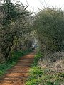 Tree-lined path - geograph.org.uk - 380231.jpg