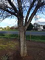 Tree in Worcester, ZA 7.jpg