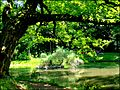 Tree in Zugdidi Botanical Garden.jpg