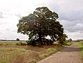 Tree in part silhouette. - geograph.org.uk - 524052.jpg