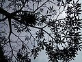 Tree photography, orion mall.jpg