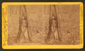 Tree showing effects of shell, Culp's Hill, by Tipton, William H., 1850-1929.png