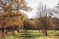 Trees in Nonsuch Park, Surrey 6 December 2014.jpg