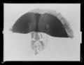 Trekantig svart hatt buren av Gustav III vid attentatet på operan den 16 mars 1792 - Livrustkammaren - 36977.tif