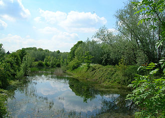 Triturus - Large ponds with abundant vegetation are typical Triturus breeding habitats (here a northern crested newt pond).