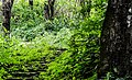 Tropical Rain Forests, North Eastern India (7159000727).jpg