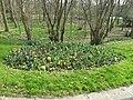 Tulipes au parc de l'Aulnaye (mars).jpg