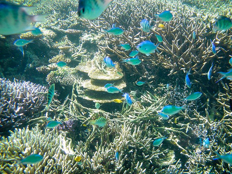 File:Underwater yaeyama okinawa Japan.jpg