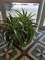 Une plante de décoration.jpg