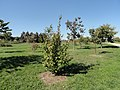 University of Kentucky Arboretum - DSC09319.JPG