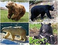 Ursus Diversity.jpg