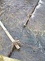 Usa Wehr für Kanal Teich Detail rechts.jpg