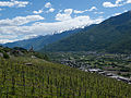 Valtellina, Italy vineyard.jpg