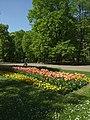 Varšava, Śródmieście, ogród Saski, tulipány II.JPG