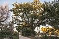 Veduta panoramica quercia.jpg