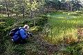 Vikipeedia suvepäevad 2021, Ivo Kruusamägi Ohepalu rabas.jpg
