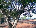Vilangan Kunnu Image011.jpg