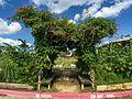 Vine Archway - Howdy Farm.jpg