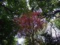Voute arboricole - panoramio.jpg