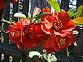WILCZE ŁUGI wiosna kwiaty i .... 09 - panoramio.jpg