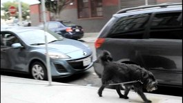 Tiedosto:Walking from a dog's residence and then returning, in the Mission in San Francisco.ogv