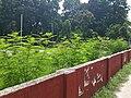 Wall of Rajshahi University Shahid Minar.jpg