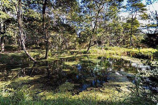 Warm Springs, Kimberley Tasmania (35991293181)