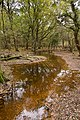 Warwickslade Cutting, restored stream - geograph.org.uk - 1570704.jpg