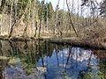 Wertach-alluvial-forest.JPG