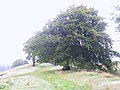 West Yorkshire Sculpture Park (3807428646).jpg