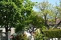 Wiener Naturdenkmal 773 - Kornelkirsche (Döbling) c.JPG