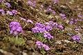 Wild flower..1.jpg