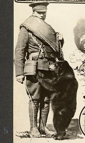 Winnipeg (bear) - Image: Winnie the Bear 1915