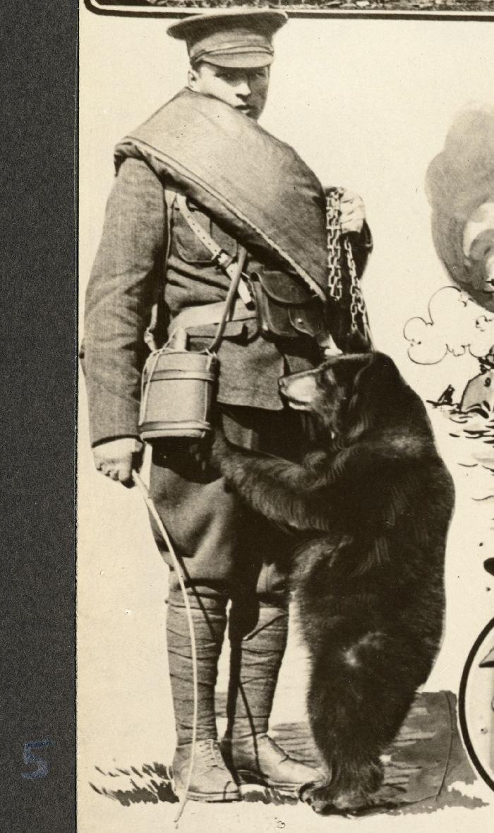 Winnie the Bear 1915