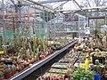 Winterbourne Greenhouse (5595078999).jpg