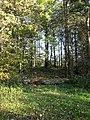 Wood near Watlass Moor - geograph.org.uk - 274481.jpg