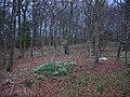 Woodland, East Fortune - geograph.org.uk - 139912.jpg