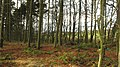 Woodland, Oakersdykes - geograph.org.uk - 1589208.jpg