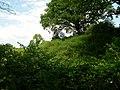 Woodland by Afon Gwynon. - geograph.org.uk - 1333943.jpg