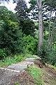 Woodland path at Coleton Fishacre - geograph.org.uk - 928006.jpg
