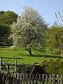 Wuppertal, Breitenbruch 2 + 3, Wiese hinter dem Haus mit blühendem Obstbaum.jpg