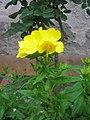 Yellow flower (1).jpg